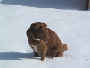 dogs in snow 2015-02-22 003