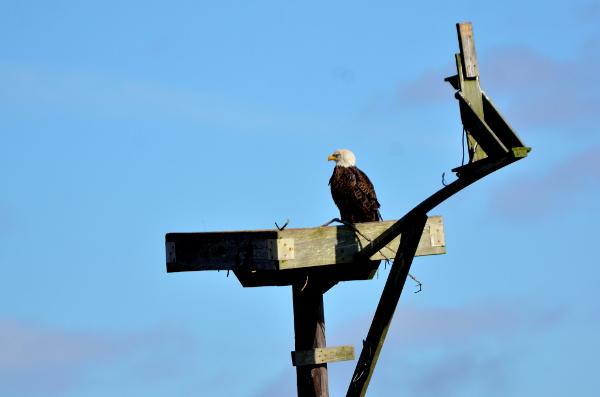 6-eagleospreycam_8683