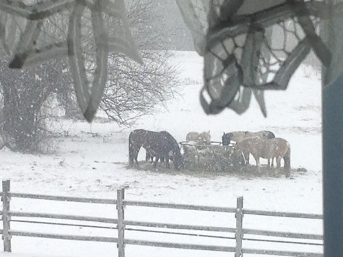 5-ff-12-16-horses-in-snow