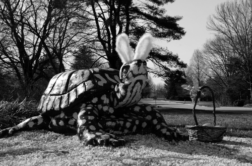 5-easter-turtle-mono_7525