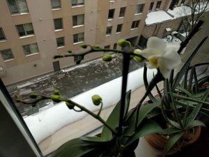 3-ff-02-01-roger-bultot-flower